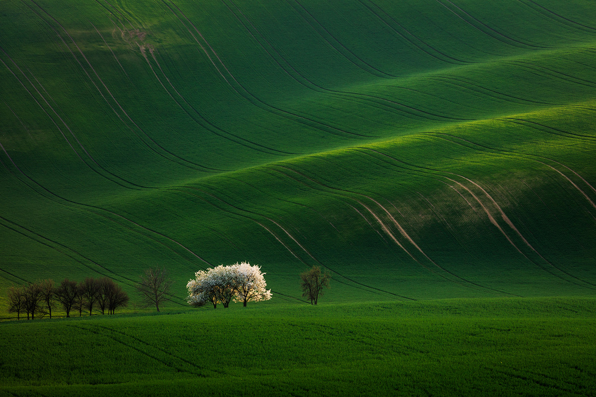 Sentinel trees, Day 2 / South Moravia