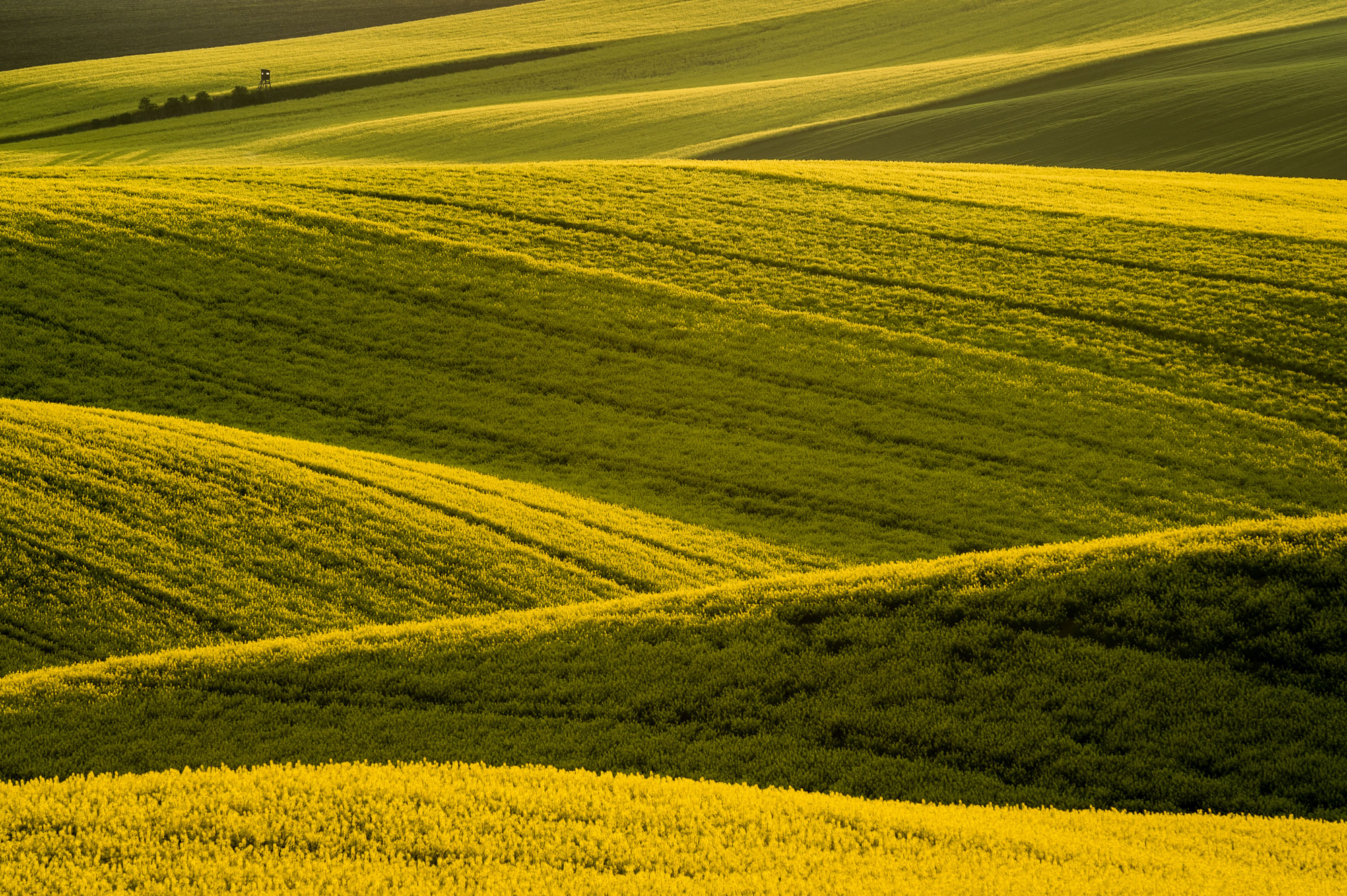 Yellow waves, South Moravia