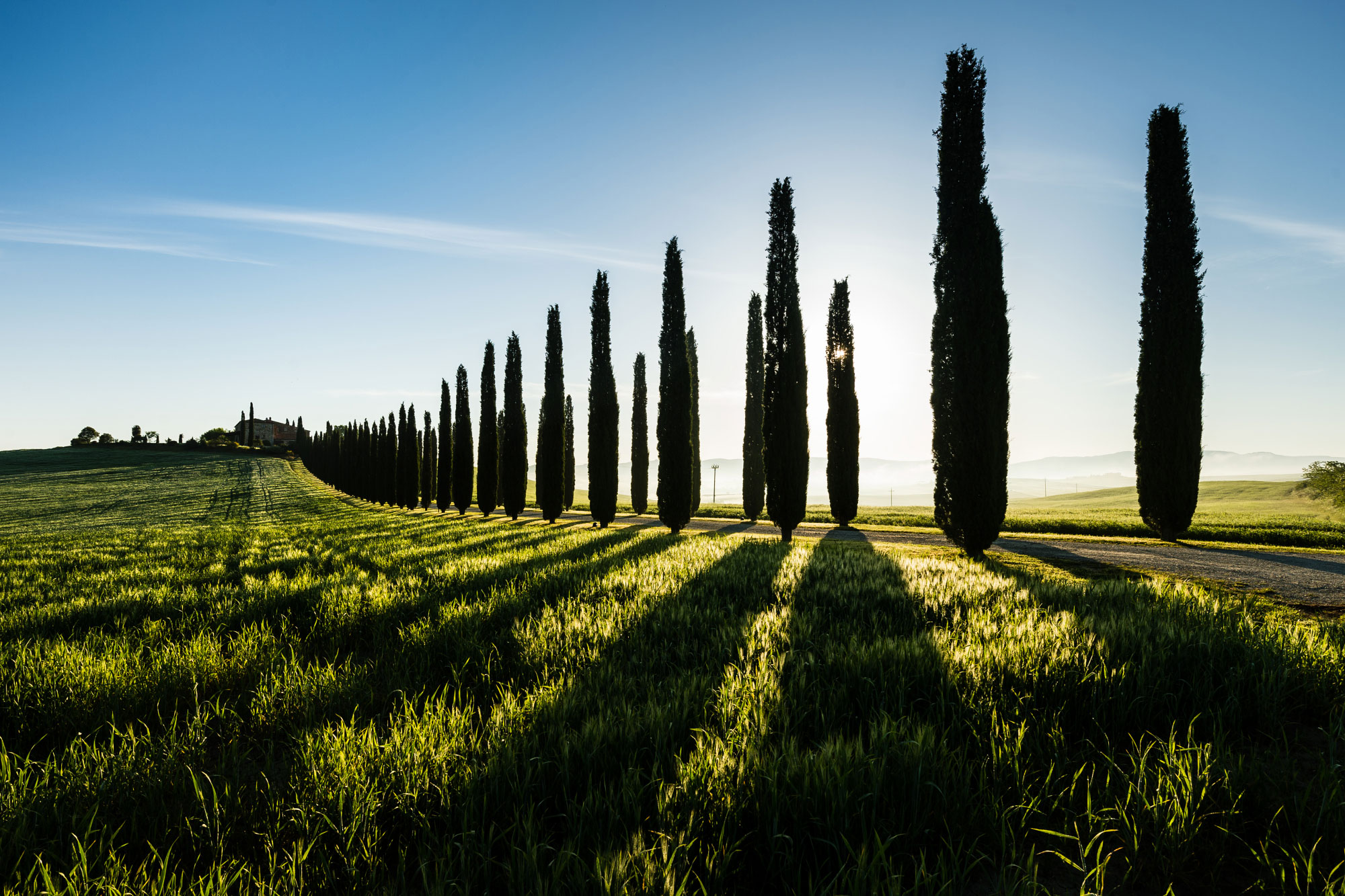 Cypress trees road, Tuscany